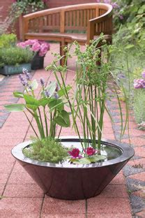 container water garden supplies ways to use water plants