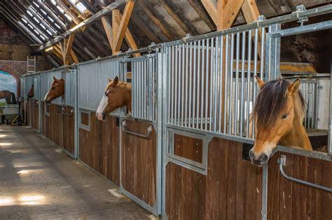stall pferd reiterhof harms in norderney pferde