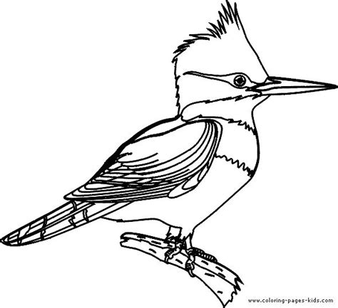 Kingfisher Coloring Pages | kingfisher coloring page visual journal pinterest