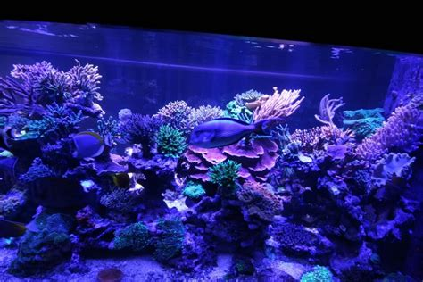 Lu Led Aquarium 2015 image gallery romanatwood aquarium