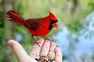 attracting birds feeding birds seasonal tips to