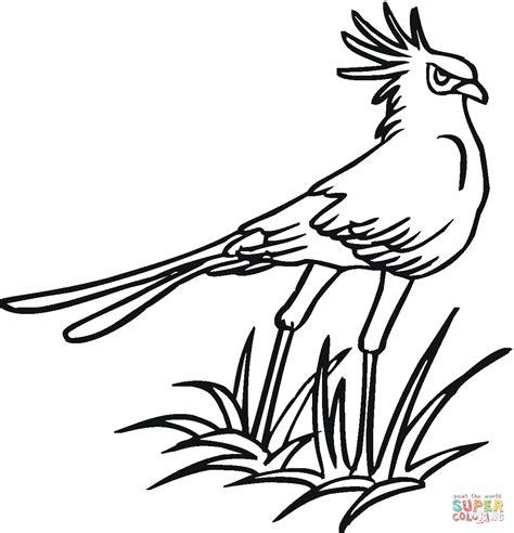 secretary bird coloring page secretary bird coloring page free printable coloring pages