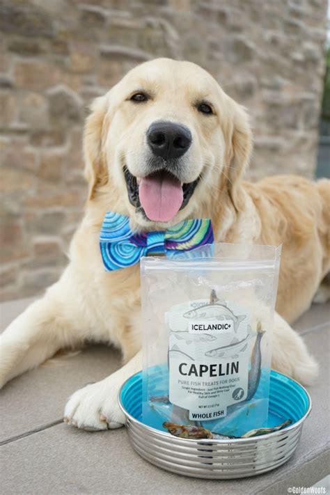 benefits of fish for dogs 3 benefits of fish treats icelandicplusdogs