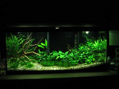 Aquascape Light by High Tech Vs Low Tech How Many Gizmos Should Your