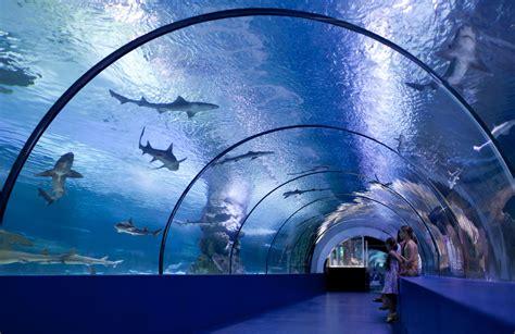 japanese aquarium osaka aquarium asia vacation group