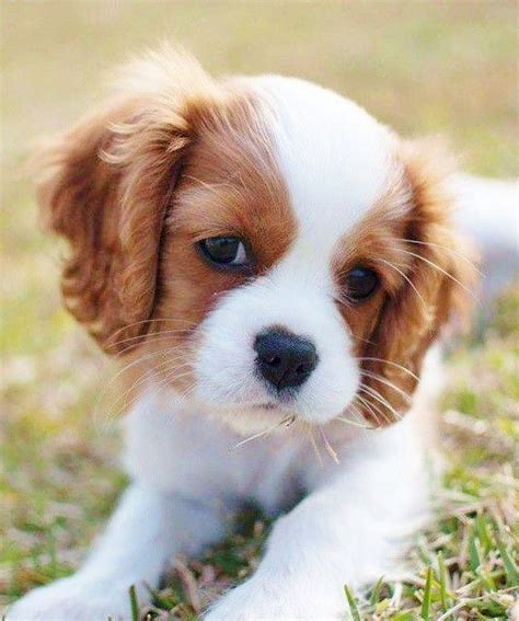 cutest small dogs small dogs pictures to pin on pinsdaddy