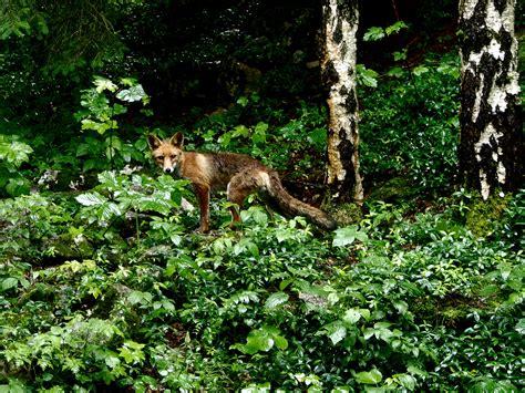 imagenes de animales de la selva garden fotos gratis 225 rbol naturaleza bosque flor animal