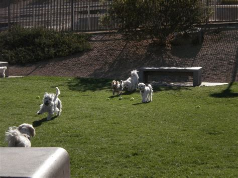 palm desert puppies leash parks in palm desert ca us