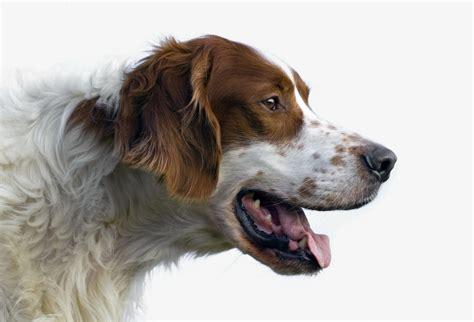humane society dogs humane society