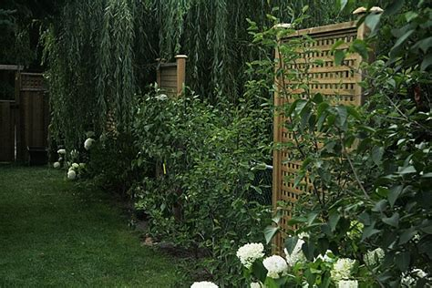 backyard privacy without a fence 113 best urban oasis images on pinterest
