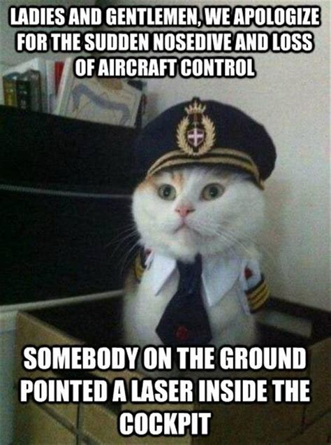 Funny Memes Of Cats - 40 funny pictures to make you laugh right now