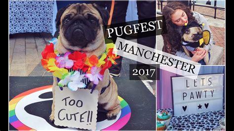 pug manchester 2017 pugfest manchester 2017 summer pug