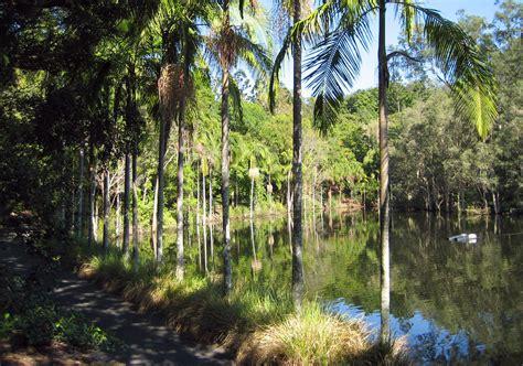 Toowong Botanical Gardens Australian Gardens At The Brisbane Botanic Gardens Brisbane