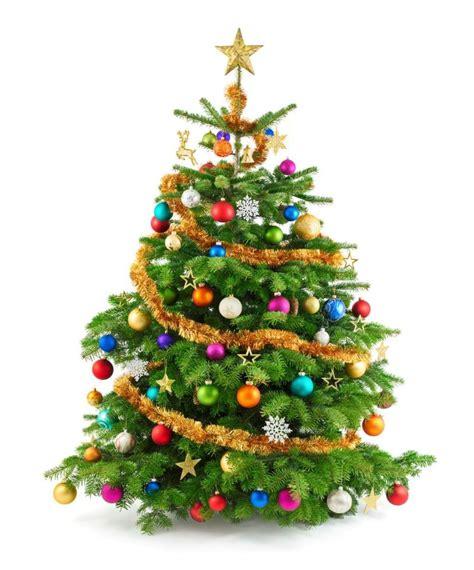 wo weihnachtsbaum kaufen weihnachtsb 228 ume kaufen was sie bei der wahl beachten sollen
