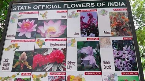 state flowers list list of indian state flowers video state official flowers