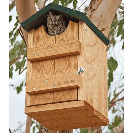 screech owl bird house yard envy