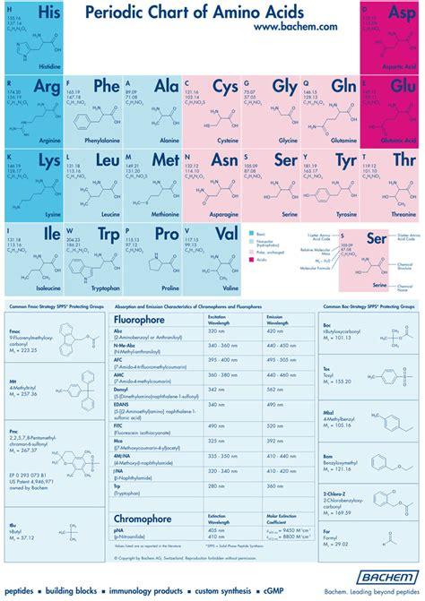 amino acid chart free premium templates