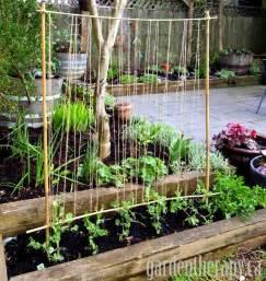 easy pea trellis how to build a pea trellis for your garden apps directories