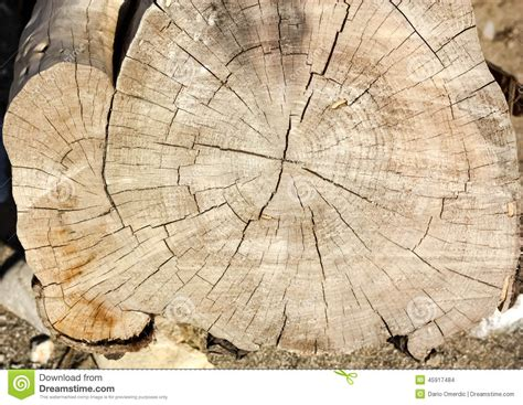 tree cross sections eucalyptus tree cross section stock photo image 45917484