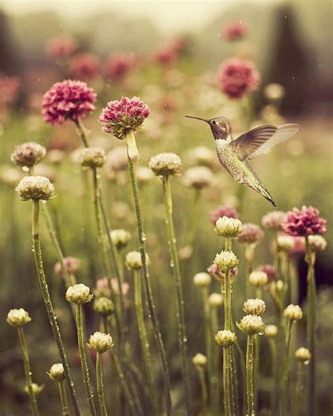 les 46 meilleures images 224 propos de la l 233 gende du colibri