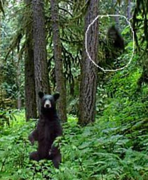 the of bigfoot frontiers of zoology robert lindsay bigfoot news