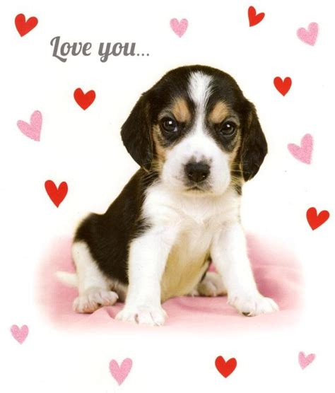 puppy valentines you sooo much card puppy s card