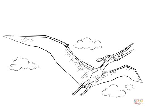 pteranodon flying coloring page free printable coloring
