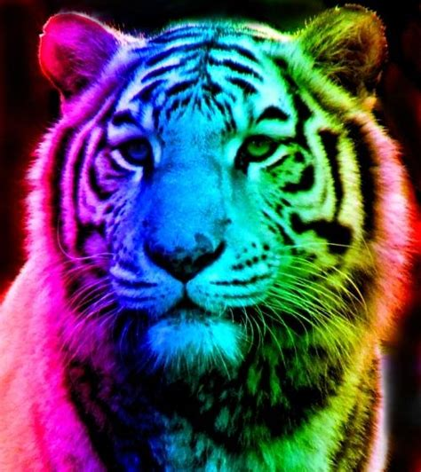 tiger colors rainbow tiger rainbow tiger 12 by tomboytigress on