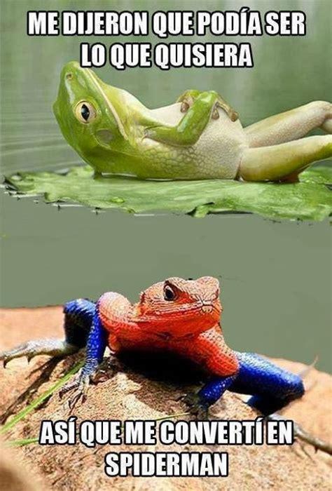 imagenes groseras de la rana imagenes chistosas de rana rene imagui
