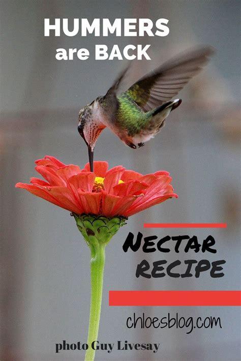 40 best birds of western north carolina images on