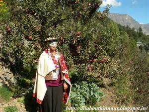Travel news famous kinnaur apples from india have their johnny