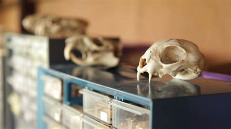 Zooarchaeology definition of marriage
