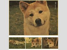 Hachiko Reviews - Online Shopping Hachiko Reviews on ... Hachiko Movie Summary