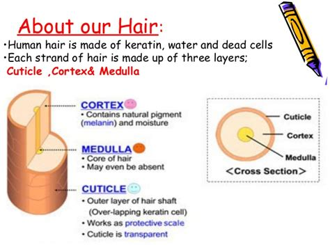 what is hair of the hair dye presentation
