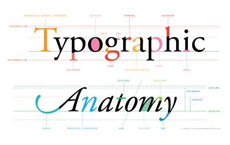 typography anatomy letterforms typographic anatomy chavelli tsui calligraphy and design