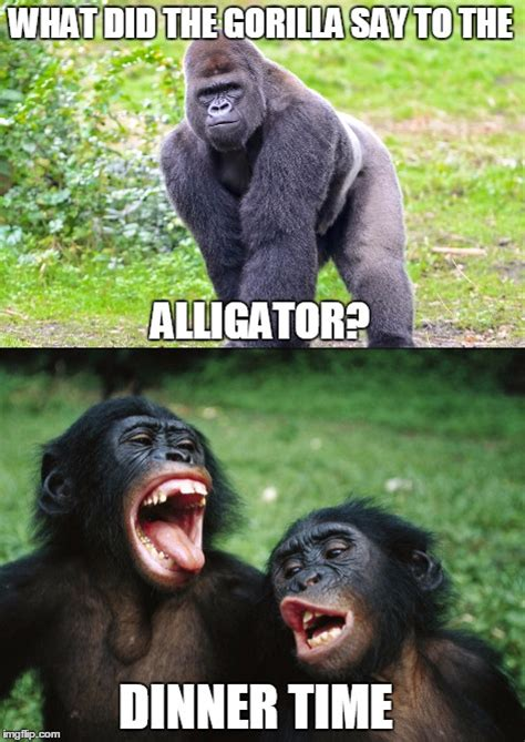 Gorilla Meme - bad joke meme is bad imgflip