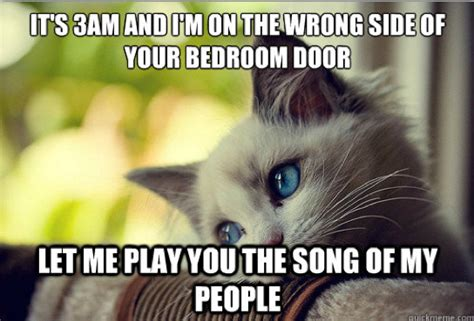 Cat Problems Meme - the best of quot first world cat problems quot 20 pics