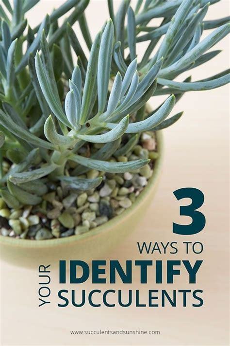 ways  identify  succulents succulents types