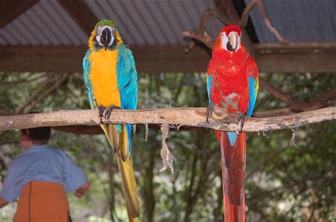 blue and gold macaw scarlet macaw blogabond