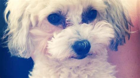 trixie  dog    lam ctv ottawa news
