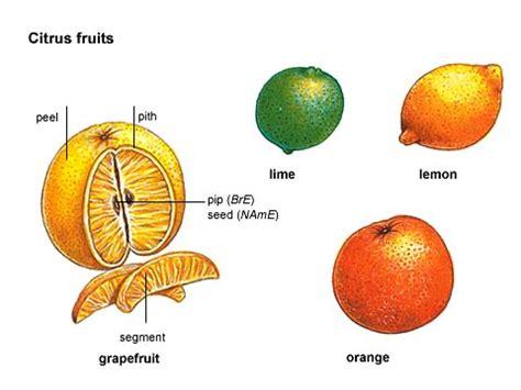 fruit definition citrus noun definition pictures pronunciation and