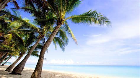 palm tree backgrounds pixelstalknet