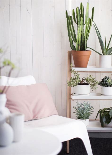Plants For Home Decor by Decorating With Cacti Ls Plus