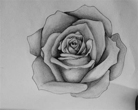Drawing Roses by Roses Images Drawings Www Pixshark Images
