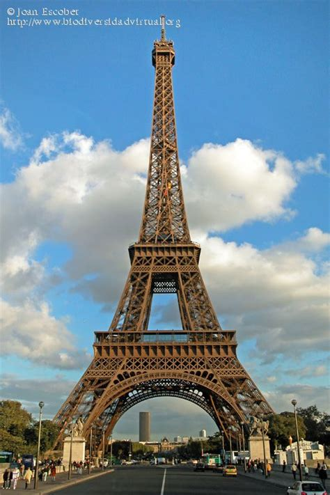 imagenes cool de la torre eiffel la torre eiffel paris 78144 biodiversidad virtual