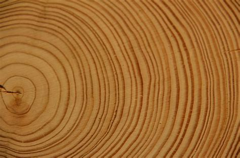 baumstamm le free photo wood annual rings tree log free image on