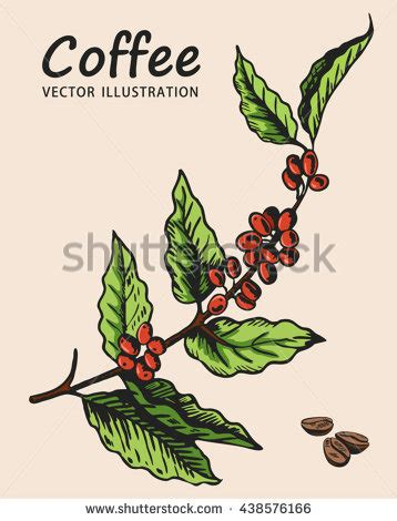 Attractive Realistic Christmas Tree #5: Stock-vector-coffee-tree-branch-element-for-design-vector-illustration-coffee-plant-438576166.jpg