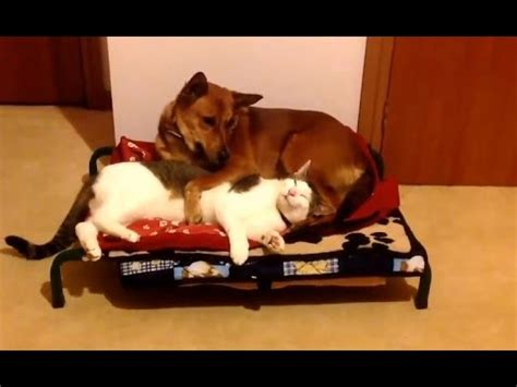 cats stealing beds cats stealing beds compilation 2015 new doovi