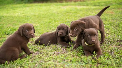 how many puppies in a litter pet health zone nationwide pet insurance