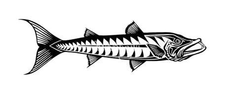 barracuda fish coloring page great barracuda fish coloring pages great barracuda fish
